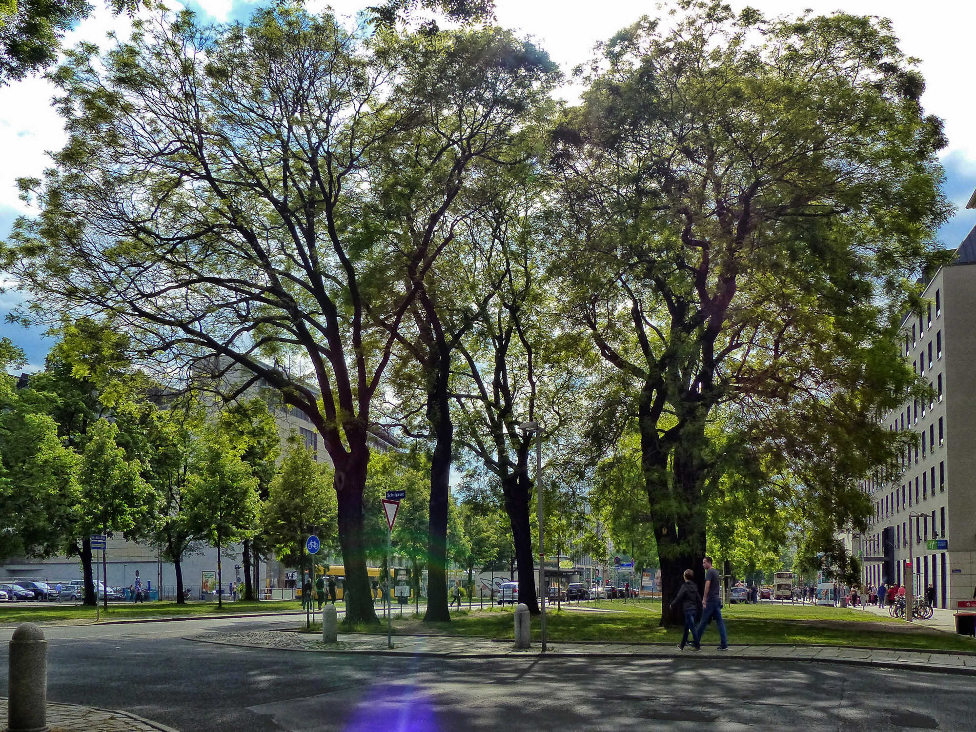 Planning software for the tree selection process in urban areas